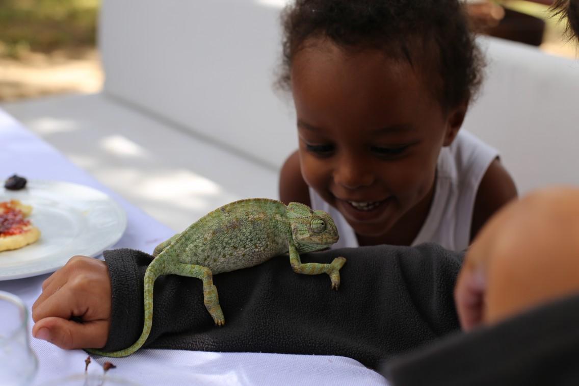 Un camaleón visita nuestra mesa