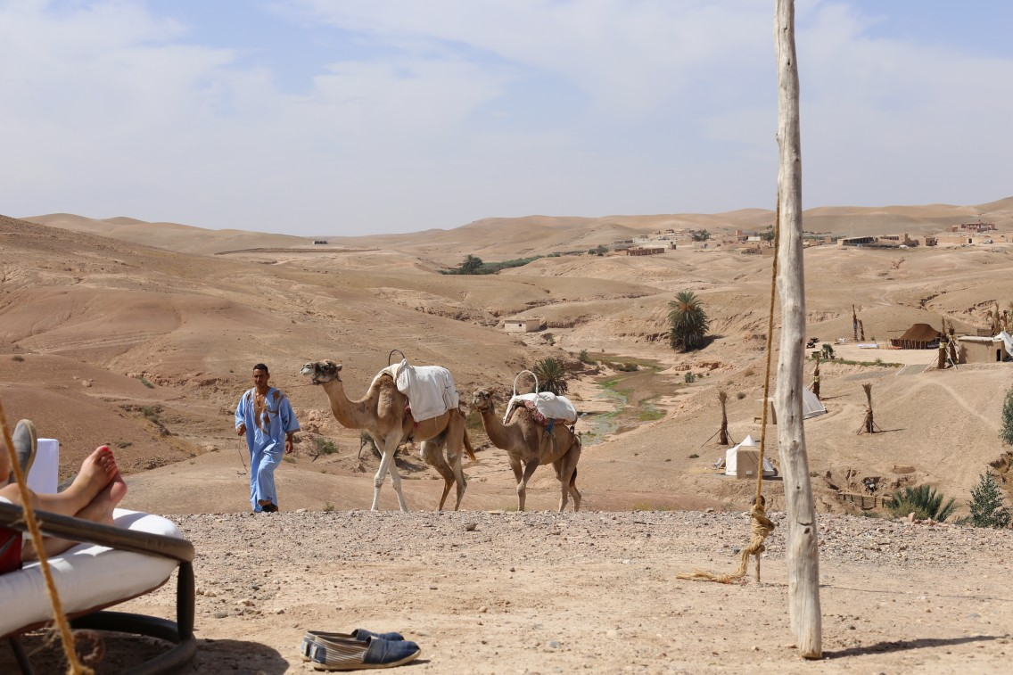 Salidas a camello por el desierto de Agafay