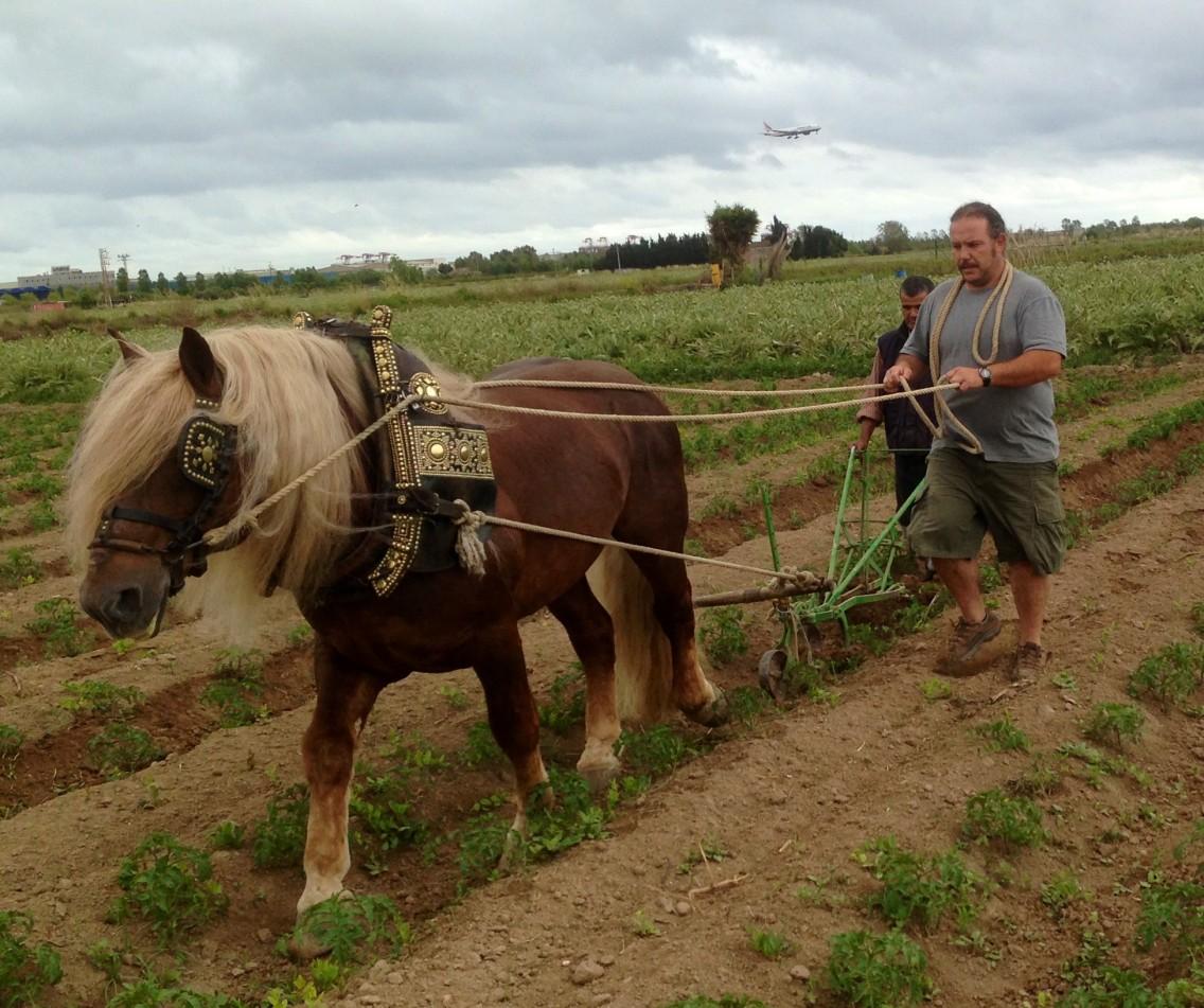 Xavi arando el campo con su caballo