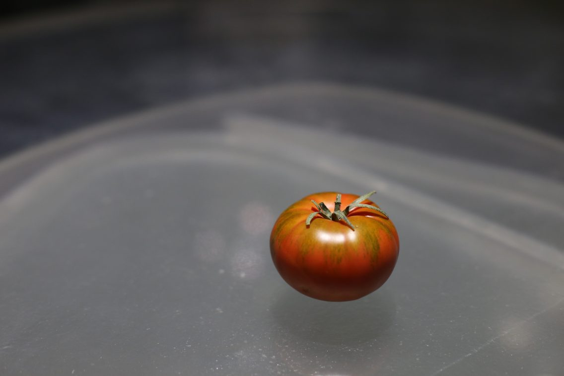 A simple tomato, prelude to one of my favourite elaborations