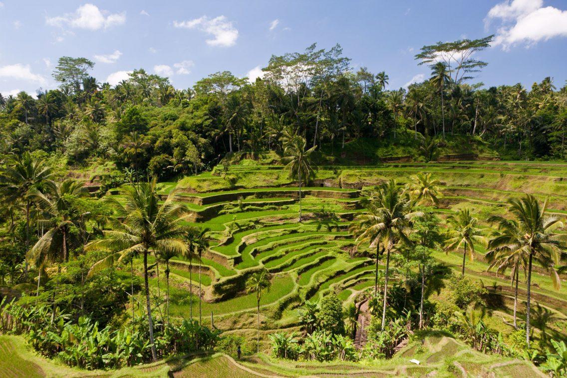 Los bancos de arrozales de Tegalalang