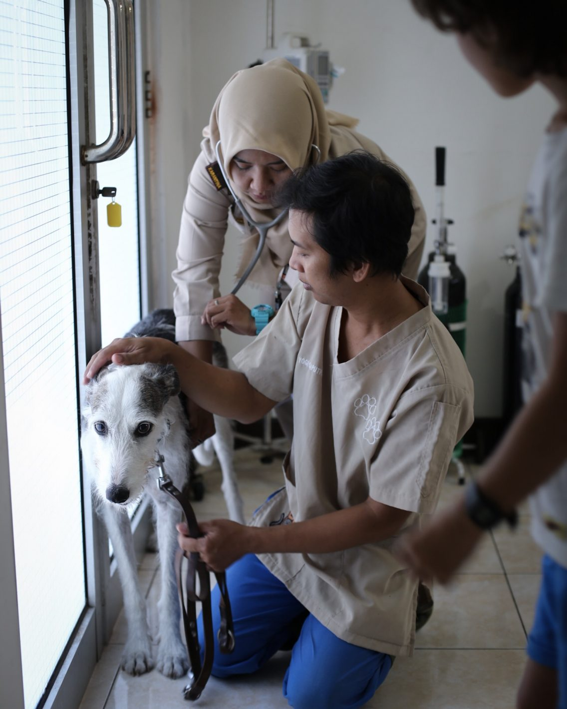 Pancha being checked by the veterinarians at the Jakarta quarantine department