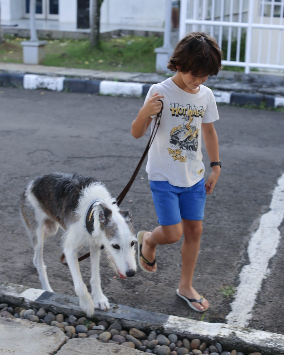 Taking Panchi for a walk while at the quarantine after a very long flight, enjoying freedom after beeing in the carrier for so many hours