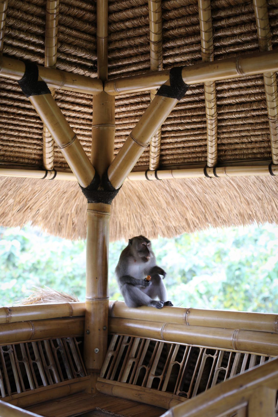 The monkey eating peacefully his piece of fruit right next to us